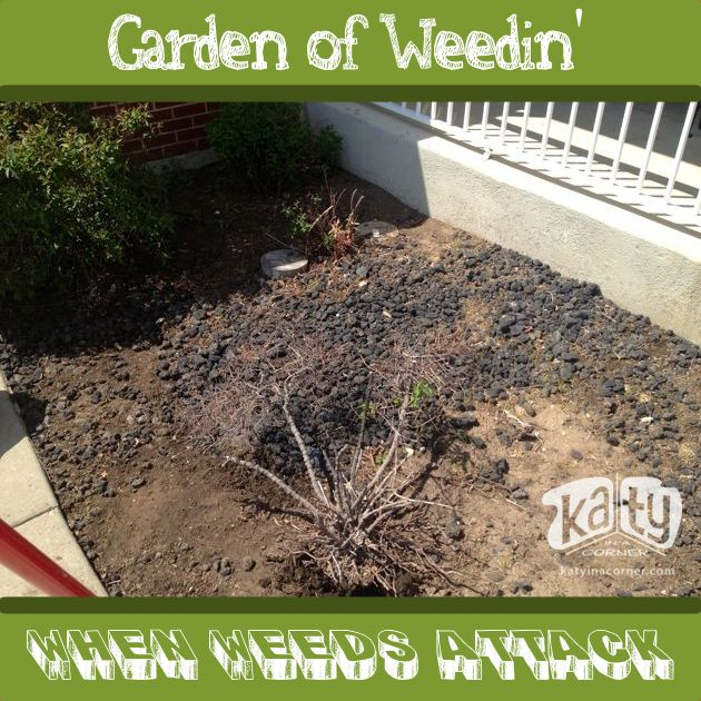 gardenofweedin