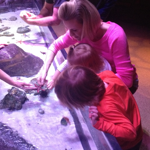Touching the Starfish at Sea Life Aquarium